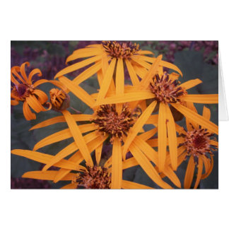 Fireworks photo card - Garden Flowers series 1