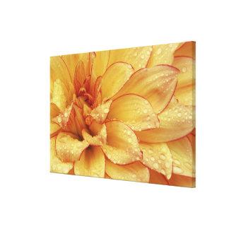 Firmemente en fotografías de la flor de Dalhia con Impresiones De Lienzo