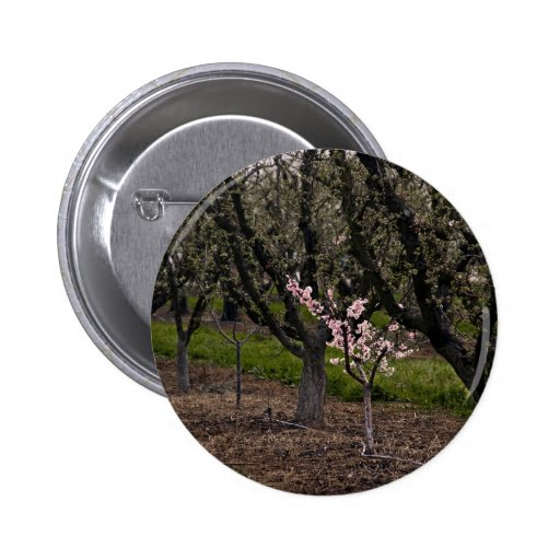 First Bloom Pinback Buttons