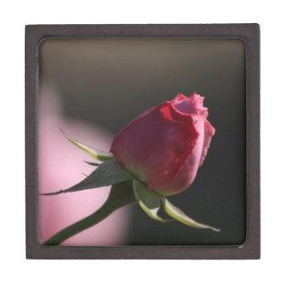 First Bloom: Pink Rosebud Premium Gift Box