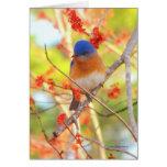 First Bluebird of Spring Card