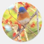 First Bluebird of Spring Sticker
