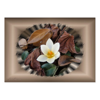 First Crocus ~ ATC Large Business Cards (Pack Of 100)