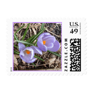 First Crocus! - postage stamps