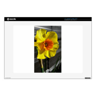 """first daffodil 15"""" laptop skins"""