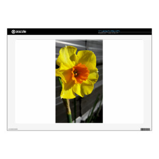 """first daffodil 17"""" laptop decal"""