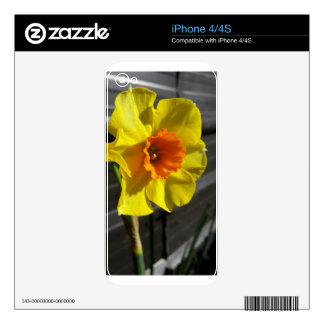 first daffodil skin for iPhone 4S