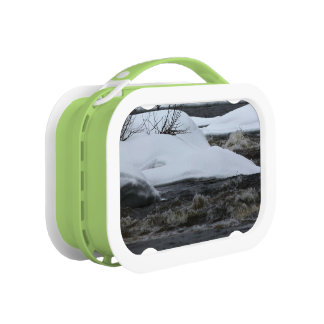 First Day Of Spring 2014 Yubo Lunch Box