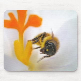 First Flower Of Spring Mouse Pad