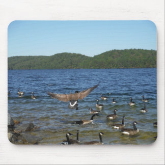 First goose to fly, geese on Lake Arrowhead Mouse Pad