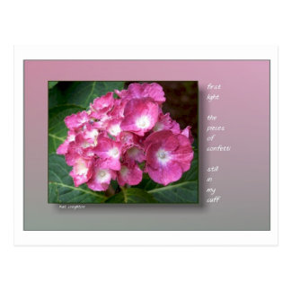 First Light with Hydrangeas Postcard