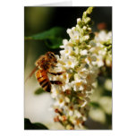 First of the Bee series Greeting Card