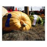 First Prize Country Fair Giant Pumpkin 10x8 Print Photo