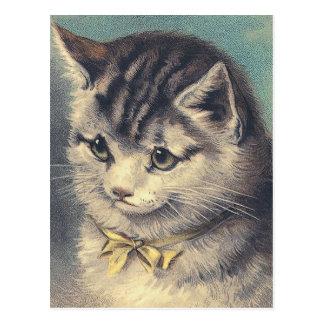 """""""First Prize"""" Vintage Cat Portrait Postcard"""