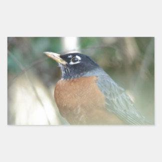 First Robin of Spring Rectangular Sticker