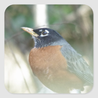 First Robin of Spring Square Sticker