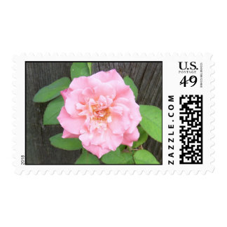 First Rose Postage