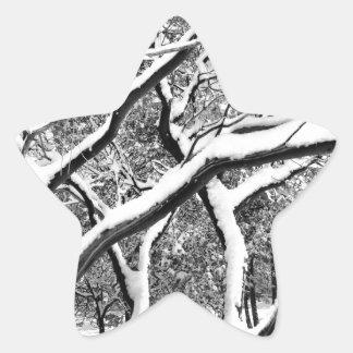 First Snow Manzanita Star Sticker