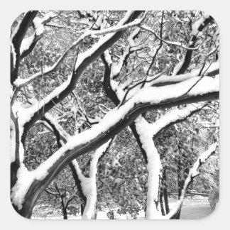 First Snow Manzanita Square Sticker