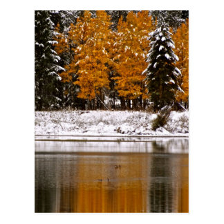 FIRST SNOW OVER LAST FALL COLORS POSTCARD