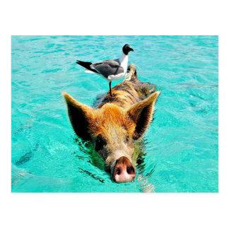 Fis de la gaviota del cerdo de la natación de la i postales