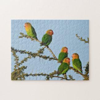 Fischer's Lovebirds (Agapornis fischeri) Jigsaw Puzzle