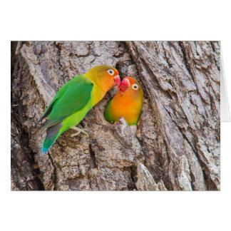 Fischer's Lovebirds kissing, Africa Card