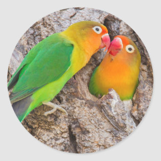 Fischer's Lovebirds kissing, Africa Classic Round Sticker