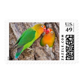 Fischer's Lovebirds kissing, Africa Postage