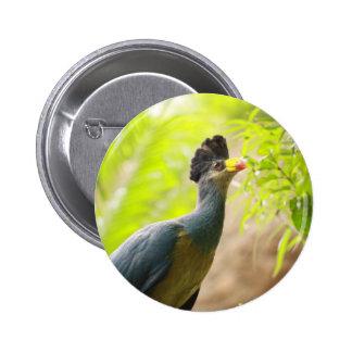 Fischer's Turaco Button