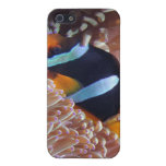 fish-001 case for iPhone 5