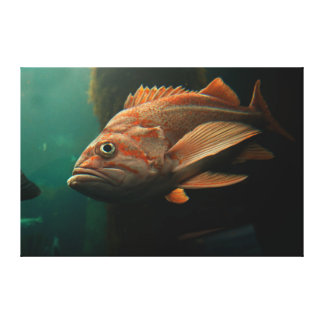 Fish 8965 canvas print