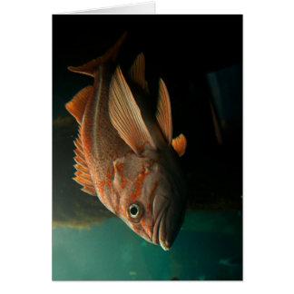 Fish 8965 card