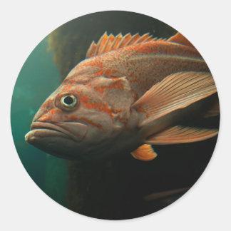 Fish 8965 classic round sticker