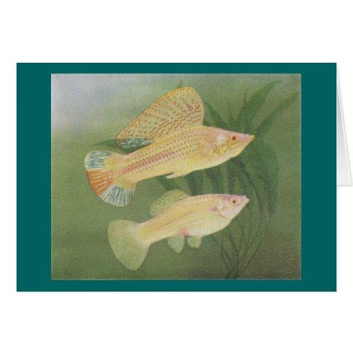 Fish - Albino Mollies - Poecilia latipinna Greeting Cards