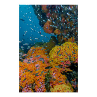 Fish Among Coral Reef Poster