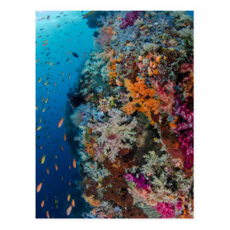 Fish and Coral Reef Scenic Postcard