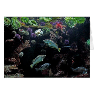 Fish and Underwater Aquatic Life Photo Greeting Card