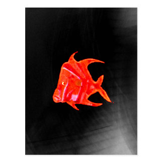 Fish Angel Red Orange 905 The MUSEUM Zazzle Gifts Postcard