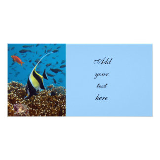 Fish Aquatic animals Card