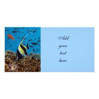 Fish Aquatic animals Picture Card