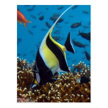Fish Aquatic animals Postcard