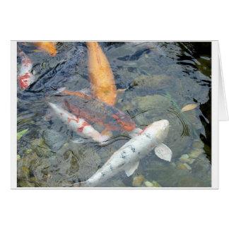 Fish at Epcot Card