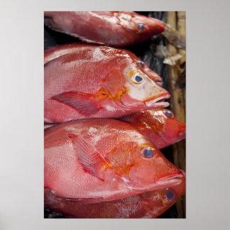 Fish at market, town of Kalabahi, Alor Island, Poster