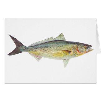 Fish - Australian Salmon - Arripis trutta Card