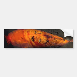 Fish - Big fish little pond Bumper Sticker