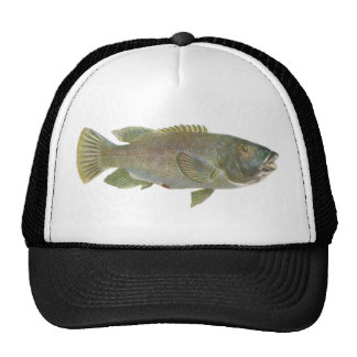 Fish - Blue Groper - Achoerodus gouldii Trucker Hat