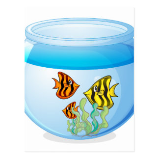 Fish bowl isolated on white background postcard