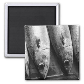 Fish closeup in black and white 2 inch square magnet