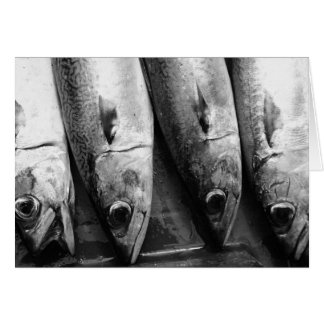 Fish closeup in black and white card